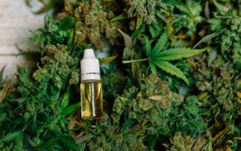 Medical Marijuana Treatment From Marijuana Dispensary